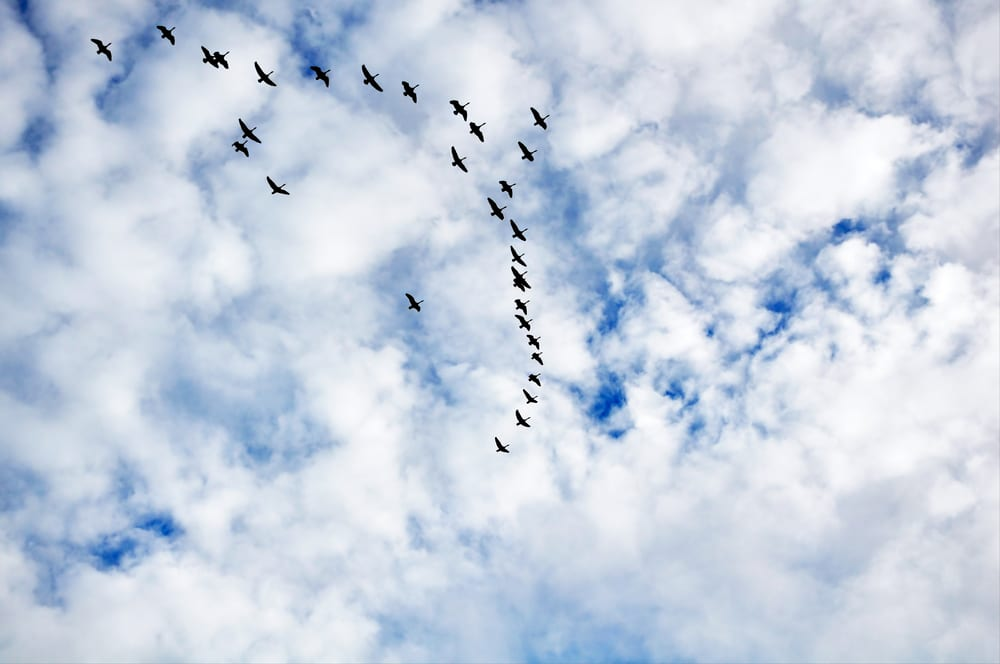 Cloud BSS: The migration begins – Executive summary